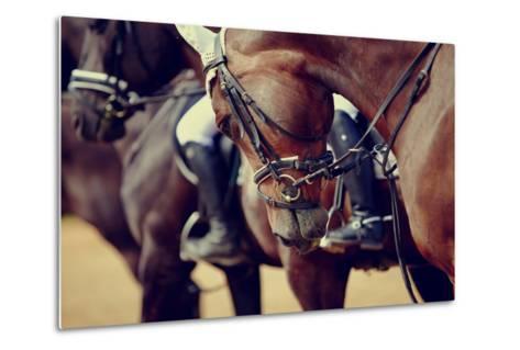 Portrait of a Sports Stallion. Riding on a Horse. Thoroughbred Horse. Beautiful Horse.-Elya Vatel-Metal Print