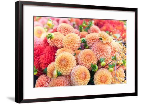 Beautiful Dahlia Flowers for Sale at Local Market-Anna Hoychuk-Framed Art Print