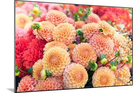 Beautiful Dahlia Flowers for Sale at Local Market-Anna Hoychuk-Mounted Photographic Print