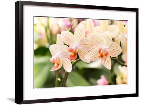 Streaked Orchid Flowers. Beautiful Orchid Flowers.- pojvistaimage-Framed Art Print
