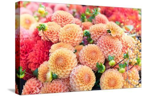 Beautiful Dahlia Flowers for Sale at Local Market-Anna Hoychuk-Stretched Canvas Print