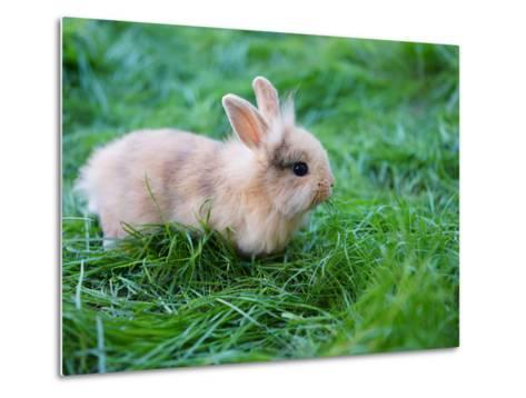 A Bunny Sitting on Green Grass-zurijeta-Metal Print