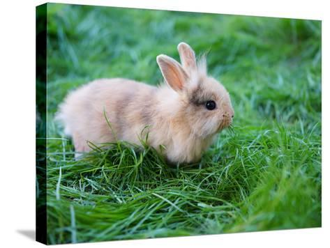 A Bunny Sitting on Green Grass-zurijeta-Stretched Canvas Print