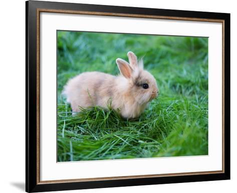 A Bunny Sitting on Green Grass-zurijeta-Framed Art Print