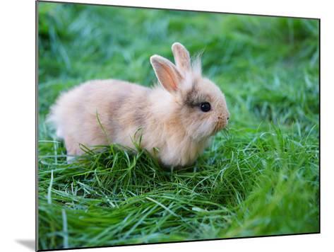 A Bunny Sitting on Green Grass-zurijeta-Mounted Photographic Print