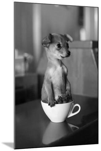 Puppy Dog in a Cup of Coffee-stokkete-Mounted Photographic Print