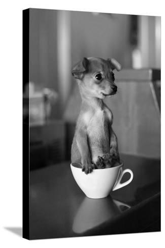 Puppy Dog in a Cup of Coffee-stokkete-Stretched Canvas Print