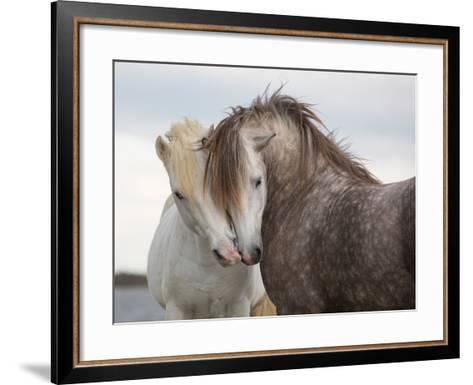 A Pair of Horses Kissing with their Heads Leaning on One Another- Tim_Booth-Framed Art Print