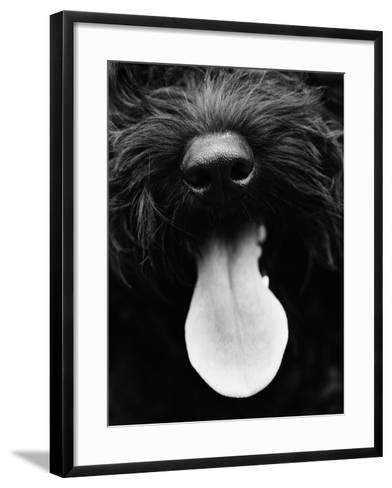 Dog Panting-Henry Horenstein-Framed Art Print