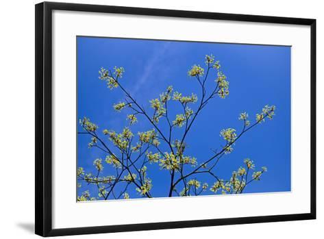 Maple Flowers-Cora Niele-Framed Art Print