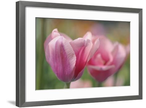Tulip Flower Pink Mirella-Cora Niele-Framed Art Print