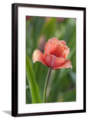 Tulip Flower Parabola-Cora Niele-Framed Art Print