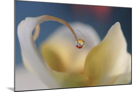 Touch Of Red-Heidi Westum-Mounted Photographic Print