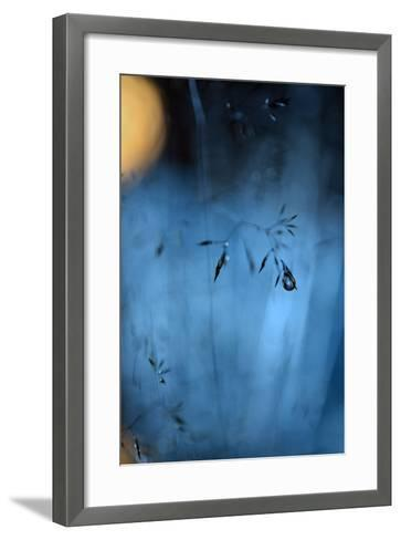 Blue Midnight-Heidi Westum-Framed Art Print