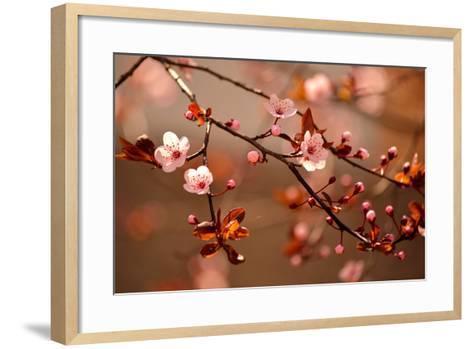 Beautiful Flowering Japanese Cherry - Sakura.- Montypeter-Framed Art Print