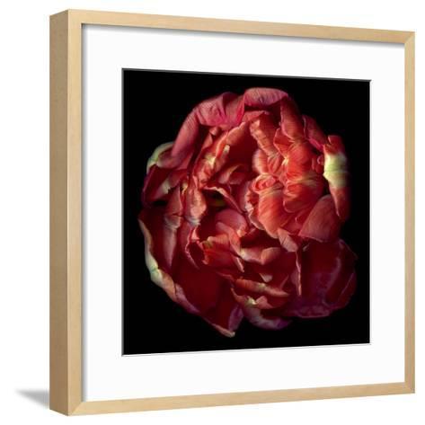 Double Red Tulip-Magda Indigo-Framed Art Print