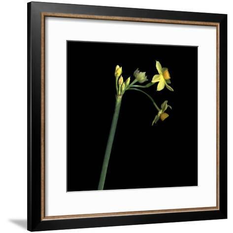 Daffodil-Magda Indigo-Framed Art Print