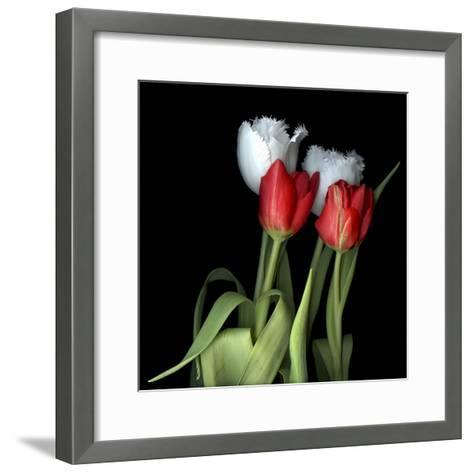 Tulips From Amsterdam-Magda Indigo-Framed Art Print