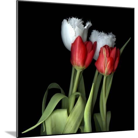 Tulips From Amsterdam-Magda Indigo-Mounted Photographic Print