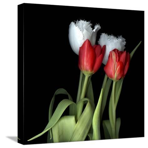 Tulips From Amsterdam-Magda Indigo-Stretched Canvas Print