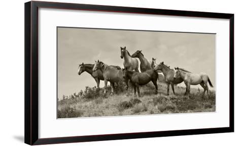 1421-Mustangs-2016-B&W-Gordon Semmens-Framed Art Print