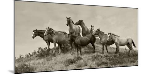 1421-Mustangs-2016-B&W-Gordon Semmens-Mounted Photographic Print