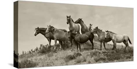 1421-Mustangs-2016-B&W-Gordon Semmens-Stretched Canvas Print