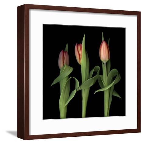 Orange Tulips-Magda Indigo-Framed Art Print