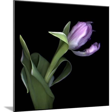 Pink Tulip 2-Magda Indigo-Mounted Photographic Print