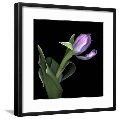 Pink Tulip 2-Magda Indigo-Framed Art Print
