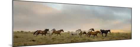 204-Dan Ballard-Mounted Photographic Print