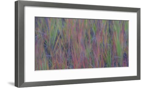 354-Dan Ballard-Framed Art Print