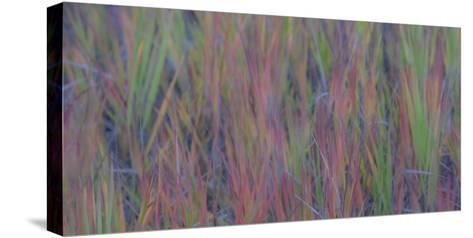354-Dan Ballard-Stretched Canvas Print