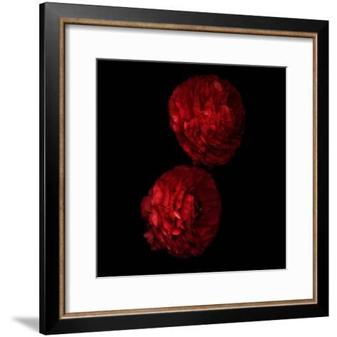 Red And More Red - Ranunculus-Magda Indigo-Framed Art Print