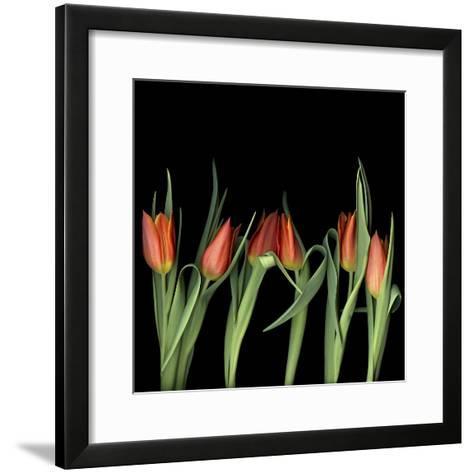 Red Tulips 8-Magda Indigo-Framed Art Print