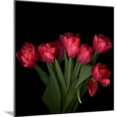 Red Tulips 6-Magda Indigo-Mounted Photographic Print