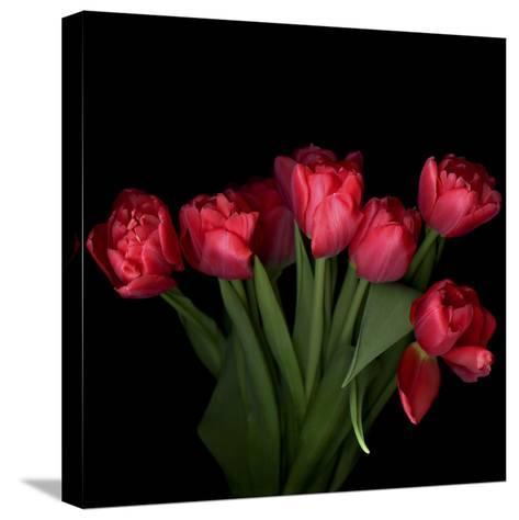 Red Tulips 6-Magda Indigo-Stretched Canvas Print