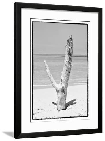 Cuba Fuerte Collection B&W - Tree on the Beach-Philippe Hugonnard-Framed Art Print