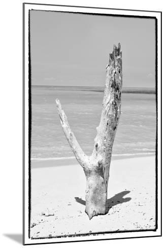 Cuba Fuerte Collection B&W - Tree on the Beach-Philippe Hugonnard-Mounted Photographic Print