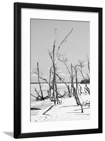 Cuba Fuerte Collection B&W - Desert of White Trees VI-Philippe Hugonnard-Framed Art Print