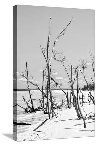 Cuba Fuerte Collection B&W - Desert of White Trees VI-Philippe Hugonnard-Stretched Canvas Print