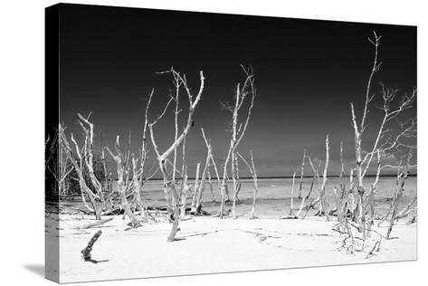 Cuba Fuerte Collection B&W - White Trees Beach IV-Philippe Hugonnard-Stretched Canvas Print