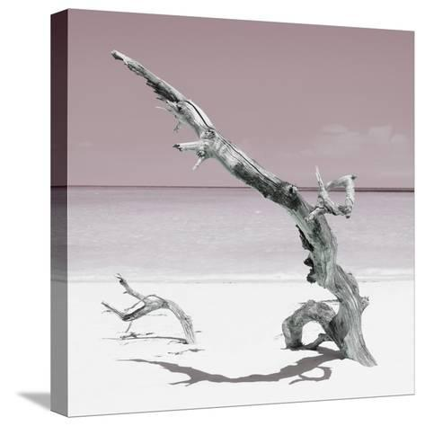 Cuba Fuerte Collection SQ - Solitary Tree - Pastel Red-Philippe Hugonnard-Stretched Canvas Print
