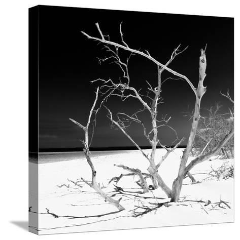 Cuba Fuerte Collection SQ BW - Tropical Beach Nature-Philippe Hugonnard-Stretched Canvas Print