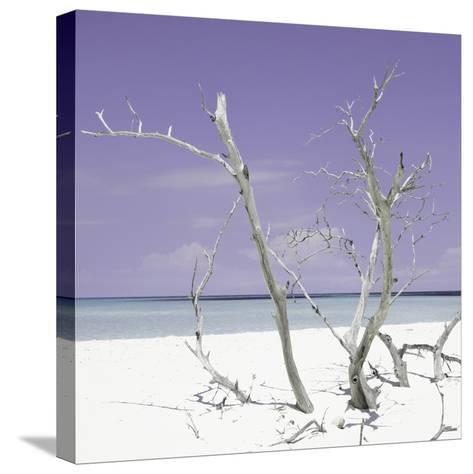 Cuba Fuerte Collection SQ - Purple Stillness-Philippe Hugonnard-Stretched Canvas Print
