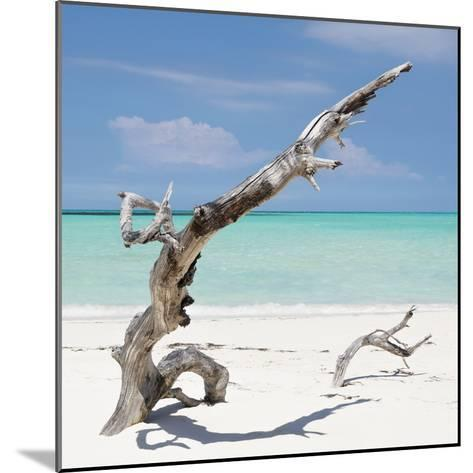Cuba Fuerte Collection SQ - Trees Movement-Philippe Hugonnard-Mounted Photographic Print