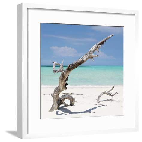 Cuba Fuerte Collection SQ - Trees Movement-Philippe Hugonnard-Framed Art Print