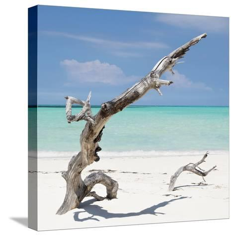 Cuba Fuerte Collection SQ - Trees Movement-Philippe Hugonnard-Stretched Canvas Print
