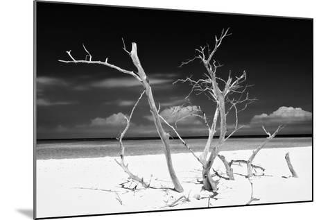 Cuba Fuerte Collection B&W - Trees and White Sand V-Philippe Hugonnard-Mounted Photographic Print