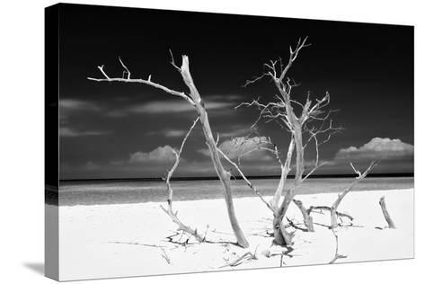 Cuba Fuerte Collection B&W - Trees and White Sand V-Philippe Hugonnard-Stretched Canvas Print